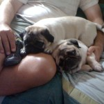 Saturday Snapshot: Puggies